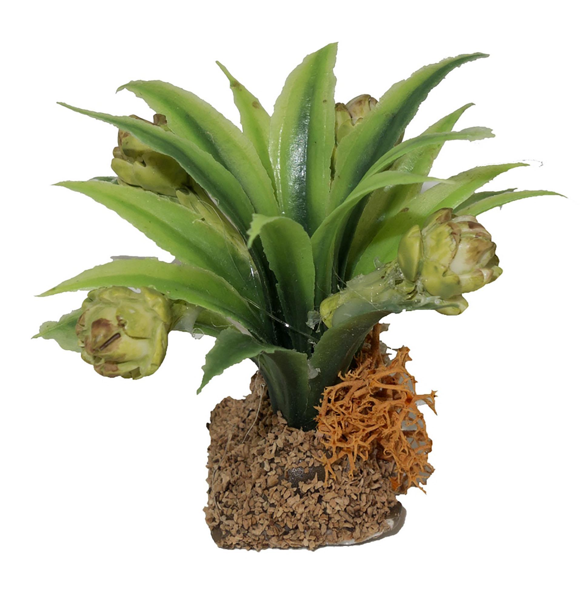 Artischockenpflanze